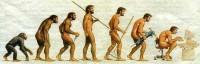 evolutia umana