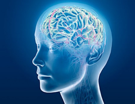 sistem nervos